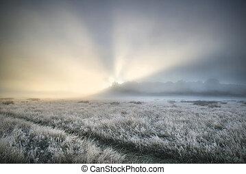 Stunning sun beams light up fog through thick fog of Autumn...