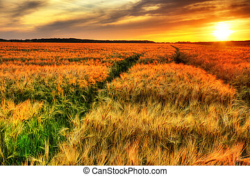 Stunning sunset over cereal field - Breath talking landscape...