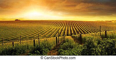 Stunning Vineyard Sunset