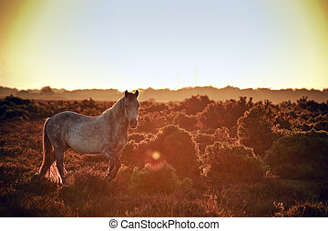 Stunning warm glow image of New Forest pony at sunrise ...