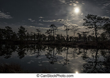 stunningly beautiful view of the night sky over a forest lake