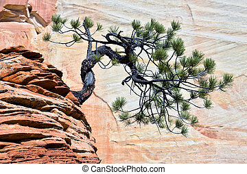 Stunted tree on rocky outcrop