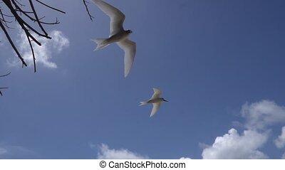 Stupid grey tern in the wild 5