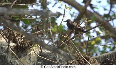 Stupid grey tern in the wild 6