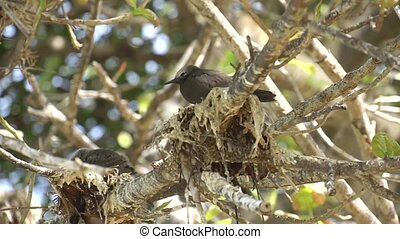 Stupid grey tern in the wild 8
