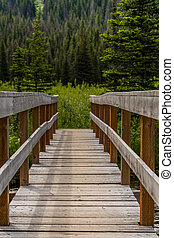 Sturdy Bridge in Pine Forest
