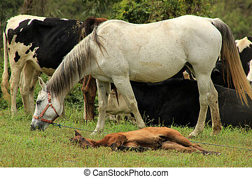 stute, fohlen, weißes, wiese