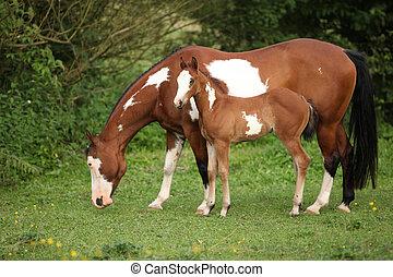 stute, pferd, bezaubernd, fohlen, farbe