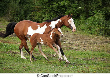 stute, pferd, fohlen, farbe, pasturage, bezaubernd