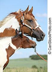 stute, pferd, ihr, fohlen, farbe