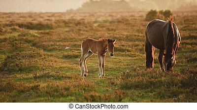 stute, pony, fohlen, lit, landschaftsbild, warm, wald, neu...