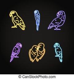 styl, komplet, papuga, ikony, neon, jarzący się