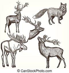 style, animaux, gravé, collection, vecteur, main, dessiné