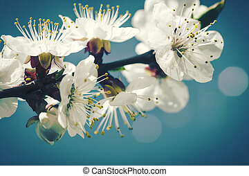 style, beauté naturelle, arrière-plans, lomo, bokeh, floral