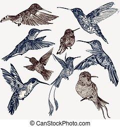 style, colibris, décoratif, gravé, collection, vecteur, vendange