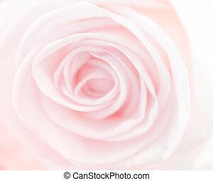 style, couleur, roses, fond, barbouillage, doux