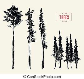 style, ensemble, arbres, illustration, pin, dessiné, gravé
