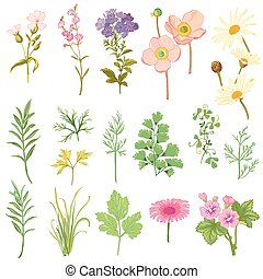 style, ensemble, -, main, aquarelle, herbes, vecteur, dessiné, fleurs