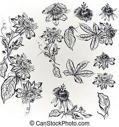 style, fleurs, réaliste, élevé, ensemble, gravé, vecteur, vendange, main, dessiné