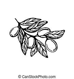 style, griffonnage, illustration, vecteur, olives, branche, arrière-plan., hand-drawn, isolé, blanc