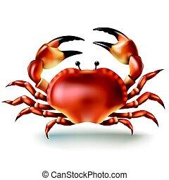style, insignes, illustration, réaliste, vecteur, crabe, autocollants