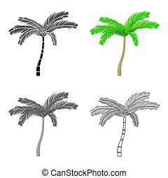 style, mexicain, isolé, arrière-plan., ventilateur, paume, blanc, dessin animé, icône