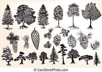 style, ou, grand, arbres, ensemble, gravé, collection, main, dessiné