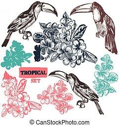style, pleinement, fleurs tropicales, toucan, ensemble, oiseau, gravé, vecteur, trois, vendange, main, dessiné