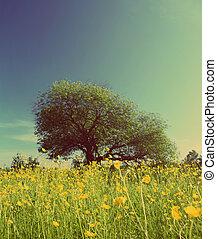 style, pré, arbre, -, retro, vendange, renoncules