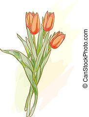 style., ramo, tulips., acuarela, rojo
