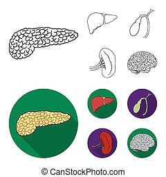 style, rein, icônes, symbole, web., collection, ensemble, brain., illustration, humain, foie, contour, organes, vésicule biliaire, stockage
