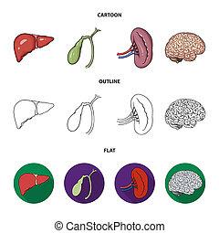style, rein, icônes, symbole, web., illustration, bitmap, ensemble, brain., collection, humain, foie, stockage, organes, vésicule biliaire, dessin animé