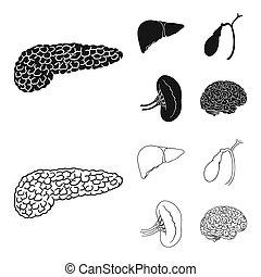 style, rein, icônes, symbole, web., illustration, bitmap, vésicule biliaire, ensemble, brain., collection, humain, noir, organes, foie, stockage