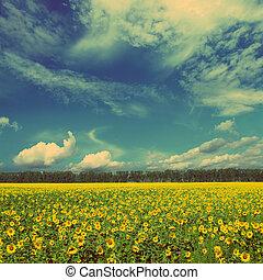 style, vendange, -, champ, tournesols, retro, paysage