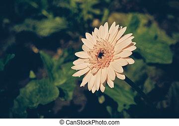 style, vendange, effet, filtre, retro fleurit