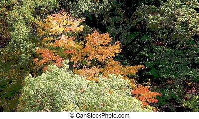 stylisé, forêt, coloré