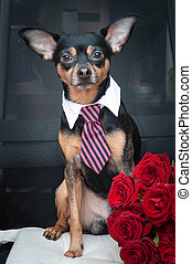 Stylish dog in a tie and a large bouquet of roses. Greeting card, Valentine's day, birthday, love