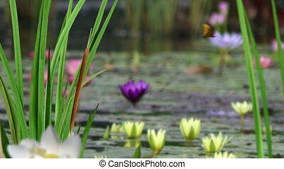 Stylish Nature Scenes