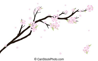 stylized, cereja, blossom., fundo