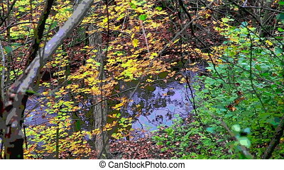 Fall forest with stream stylized to look like a painting