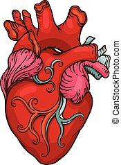 stylized, hjärta, teckning, mänsklig