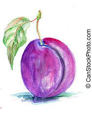 Stylized illustration of plum