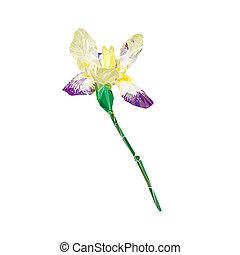 stylized iris isolated
