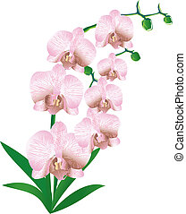 Stylized orchid for card or wedding invitation