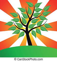 stylized, sunburst, árvore