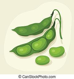 Stylized vector illustration of fresh ripe bean pods.
