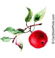 stylized, watercolor, appel, illustratie