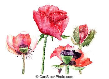 stylizovaný, mák, květiny, ilustrace