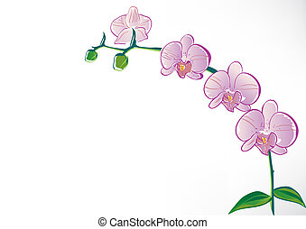 stylizovaný, orchidea