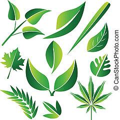 stylizowany, projekty, komplet, zielony, liście